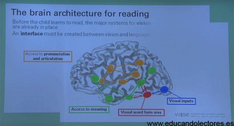 brain arquitecture